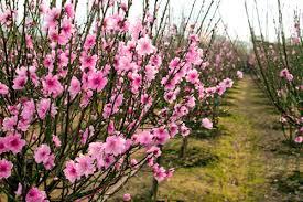 Văn mẫu lớp 7: Tả cảnh mùa xuân