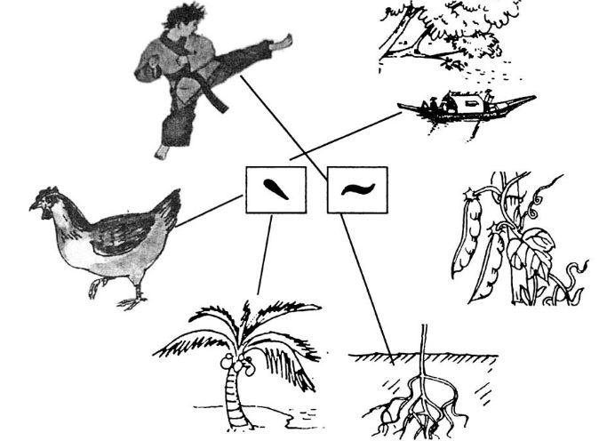 Giải vở bài tập Tiếng Việt 1 bài 5 tập 1