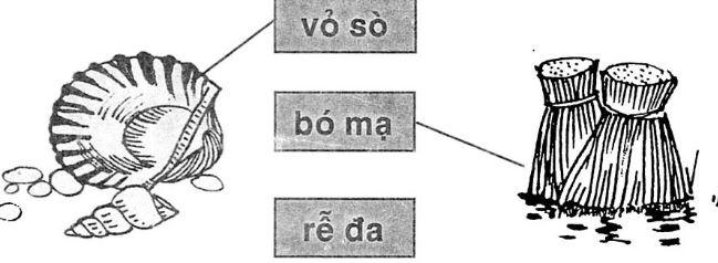 Giải vở bài tập Tiếng Việt 1 bài 19 s r
