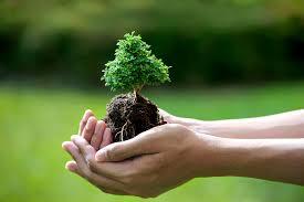 Bài viết số 5 lớp 7 đề 4: Chứng minh đời sống tổn hại nếu không bảo vệ môi trường