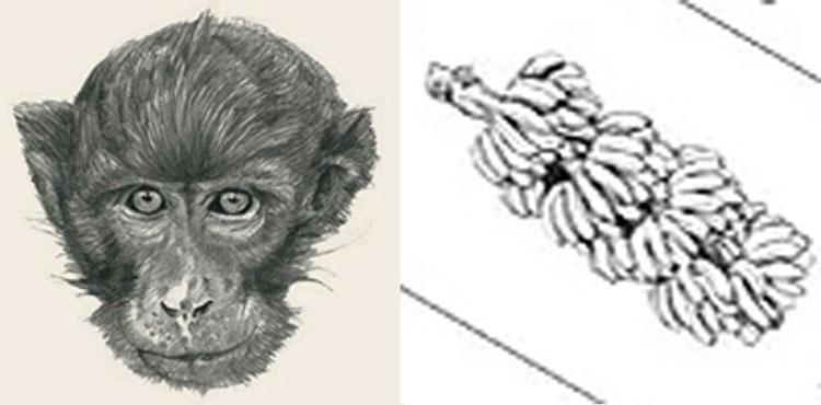 Bộ sưu tập hình ảnh tải miễn phí cho App Animal 4D