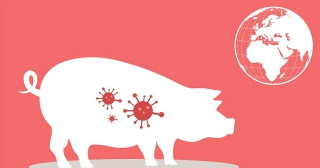 Bài tuyên truyền về bệnh dịch tả lợn Châu Phi