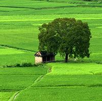 Đất nông nghiệp và phi nông nghiệp là gì