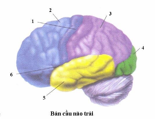 Đề kiểm tra 1 tiết môn Sinh học lớp 8 Chương IV: Thần kinh và giác quan