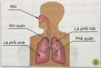 Giải bài 1: Hoạt động thở và cơ quan hô hấp