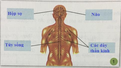 Giải bài 6: Cơ quan thần kinh của chúng ta