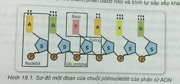 Khoa học tự nhiên 9 Bài 19: ADN và gen