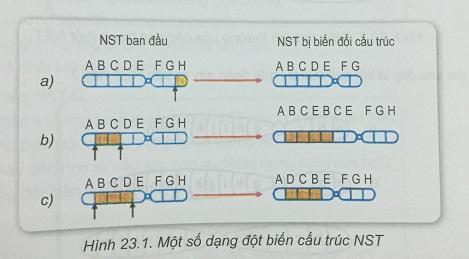 Khoa học tự nhiên 9 Bài 23: Đột biến cấu trúc nhiễm sắc thể
