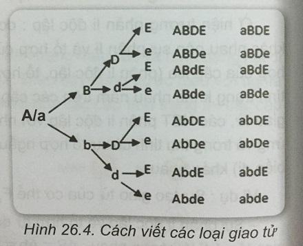 Khoa học tự nhiên 9 Bài 26: Di truyền học Menđen - Lai hai cặp tính trạng