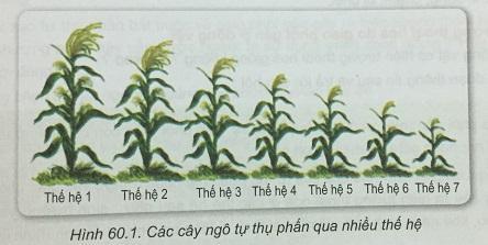 Khoa học tự nhiên 9 bài 60: Lai giống vật nuôi, cây trồng