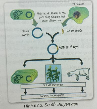 Khoa học tự nhiên 9 bài 62: Công nghệ gen